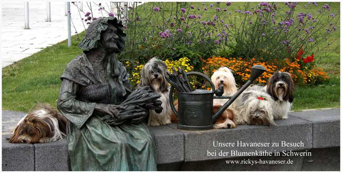 Blumen-K-the-in-Schwerin